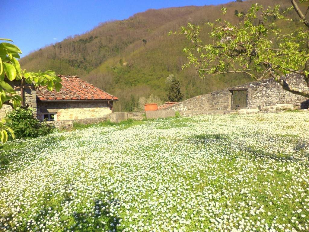 Old mill renovated, just 30 minutes from Lucca - Borgo a Mozzano