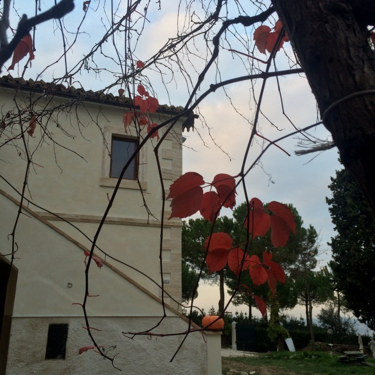 Farm house Fonte Pietre between sea, mountains and Wine - Offida