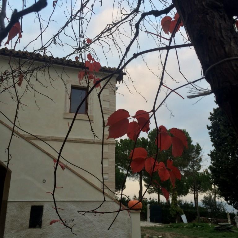 Casale Fonte delle Pietre tra Mare, Monti cibo e vini DOC - Offida