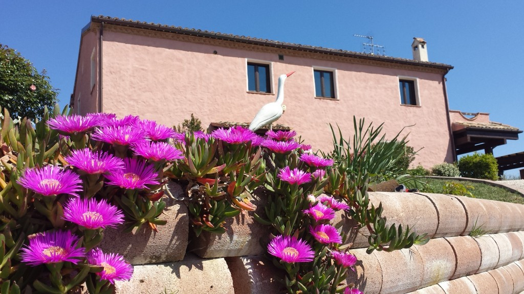 Country/Farmhouse Osimo - Osimo