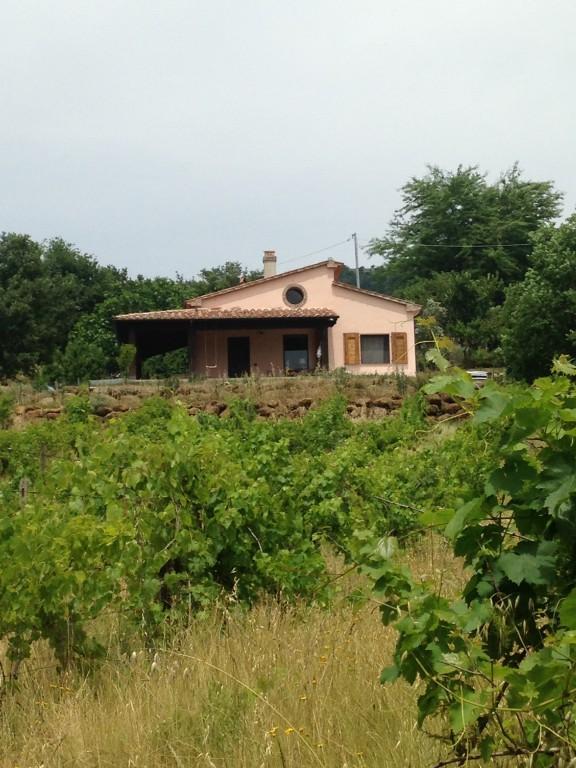 Maison de campagne/ferme Elmo - Sorano