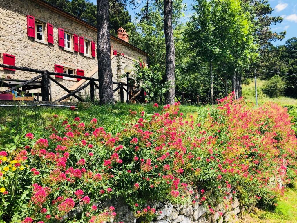 Bauernhaus Cortona - Cortona